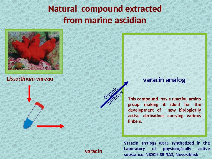 Natural compound extracted from marine ascidian Varacin analogs were synthetized in the Laboratory of physiologically active