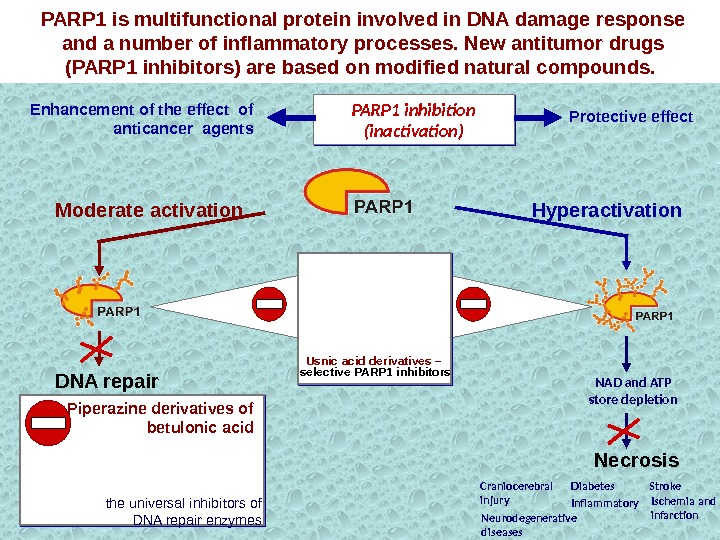 NAD and ATP  store depletion Neurodegenerative diseases Stroke. Craniocerebral injury Ischemia and infarction. Diabetes Inflammatory.