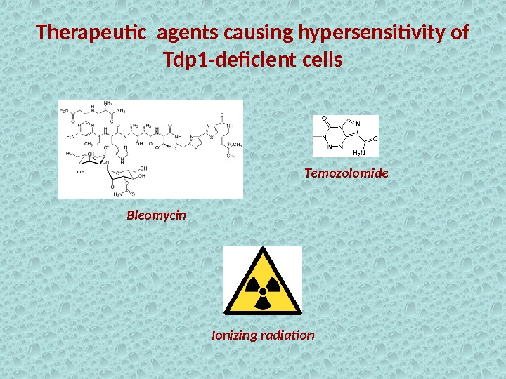 Therapeutic agents causing hypersensitivity of Tdp 1 -deficient cells Bleomycin Temozolomide Ionizing radiation