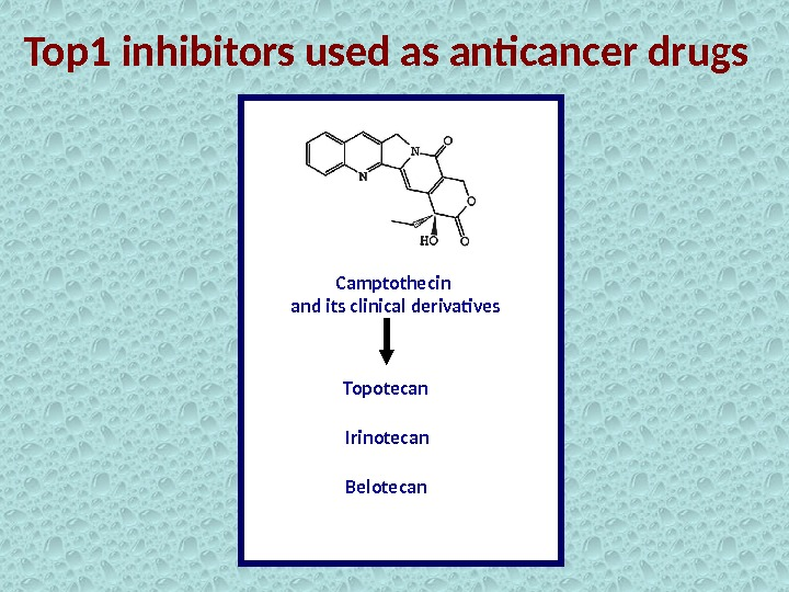 Top 1 inhibitors used as anticancer drugs Camptothecin and its clinical derivatives Topotecan Irinotecan Belotecan