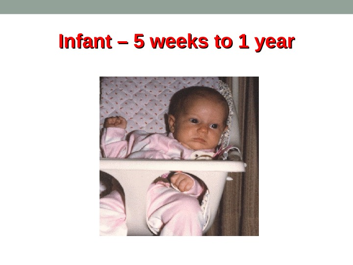 Infant – 5 weeks to 1 year
