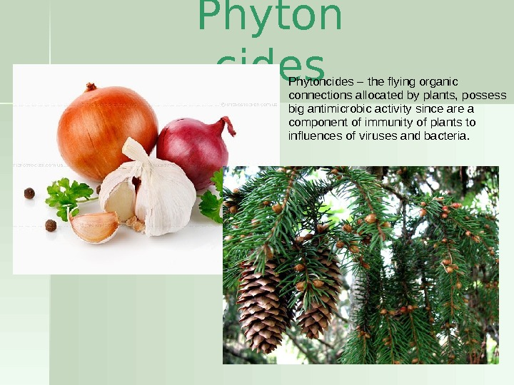 Phyton cides. Phytoncides – the flying organic connections allocated by plants, possess big antimicrobic