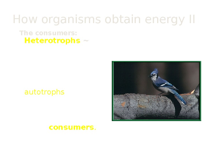 How organisms obtain energy II The consumers:  Heterotrophs ~ An organism that cannot make its