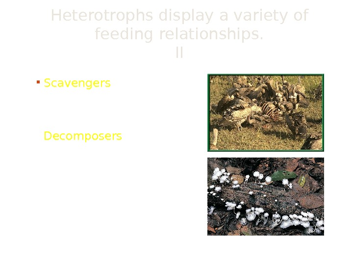 Heterotrophs display a variety of feeding relationships. II Scavengers eat animals that have already died Decomposers