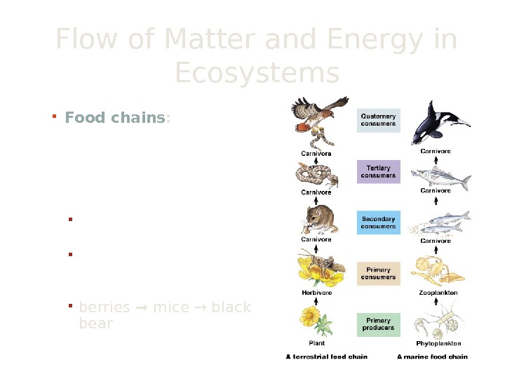 Flow of Matter and Energy in Ecosystems Food chains :  the stepwise flow of energy
