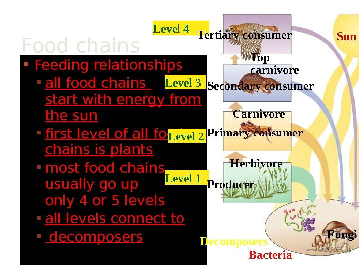 Feeding relationships all food chains start with energy from the sun  first level of