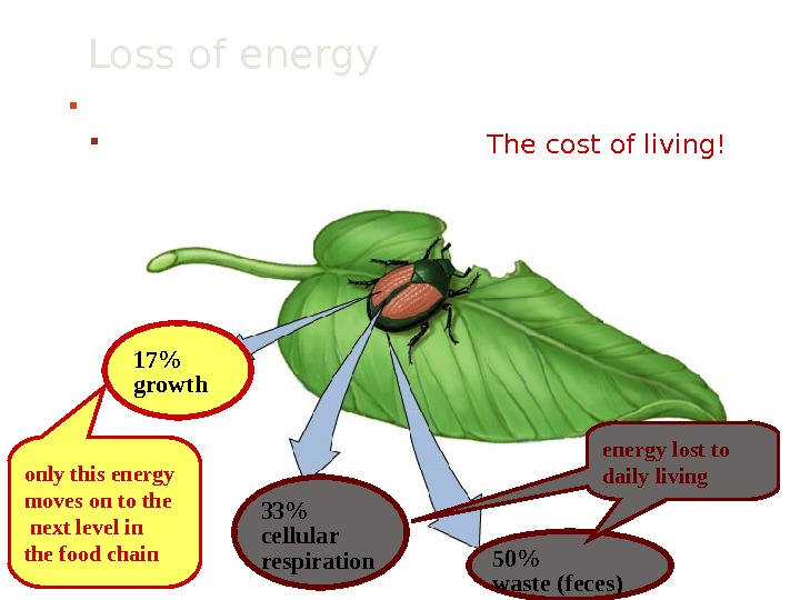 Loss of energy between levels of food chain To where is the energy lost?  The