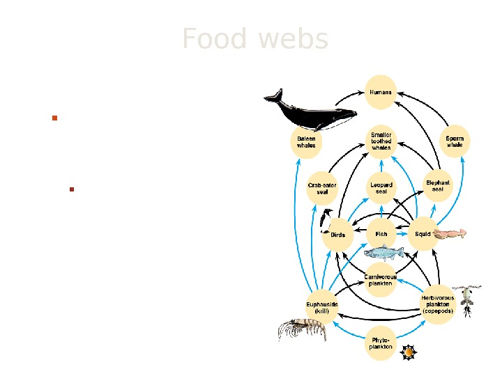 Food webs network of interconnecting food chains It is a more realistic view of the trophic