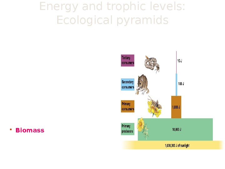 Energy and trophic levels:  Ecological pyramids show energy flows through an ecosystem.  illustrates that