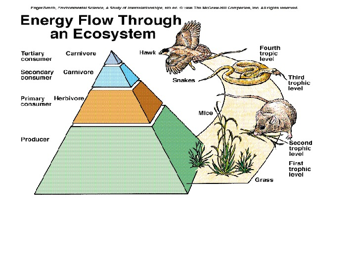 As energy flows from one level to the next throphic level ,  approximately 90 of