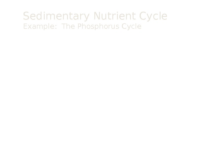 Sedimentary Nutrient Cycle Example:  The Phosphorus Cycle P in rock (apatite) (weathering)P in soil plant