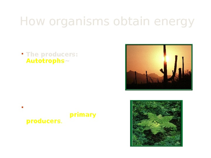 How organisms obtain energy The ultimate source of the energy for life is the sun.
