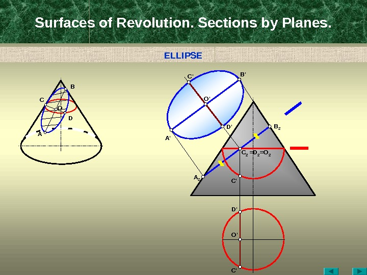 Surfaces of Revolution. Sections by Planes. A C B D D ' B ' C '