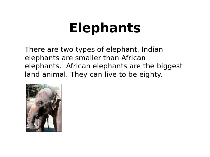 There are two types of elephant. Indian elephants are smaller than African elephants are