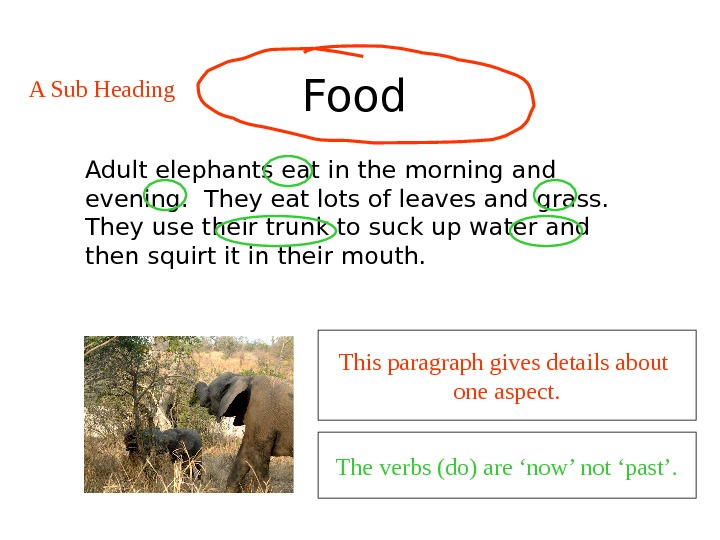 Food  Adult elephants eat in the morning and evening.  They eat lots