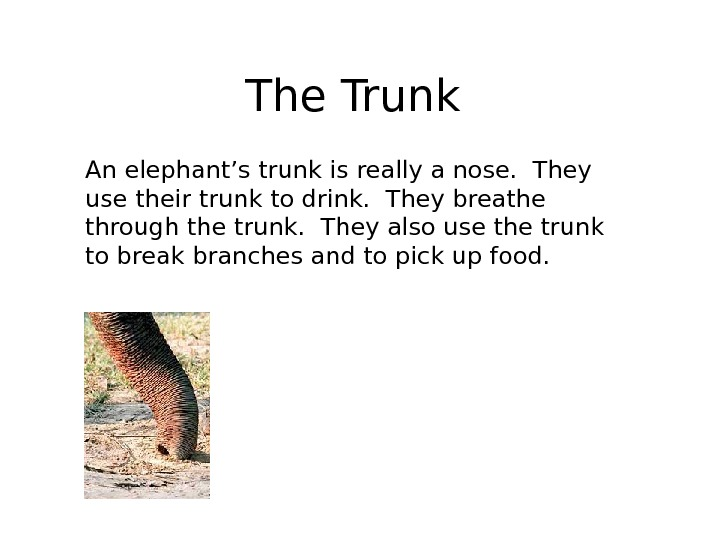 The Trunk An elephant's trunk is really a nose.  They use their trunk