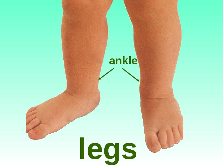 legs ankle