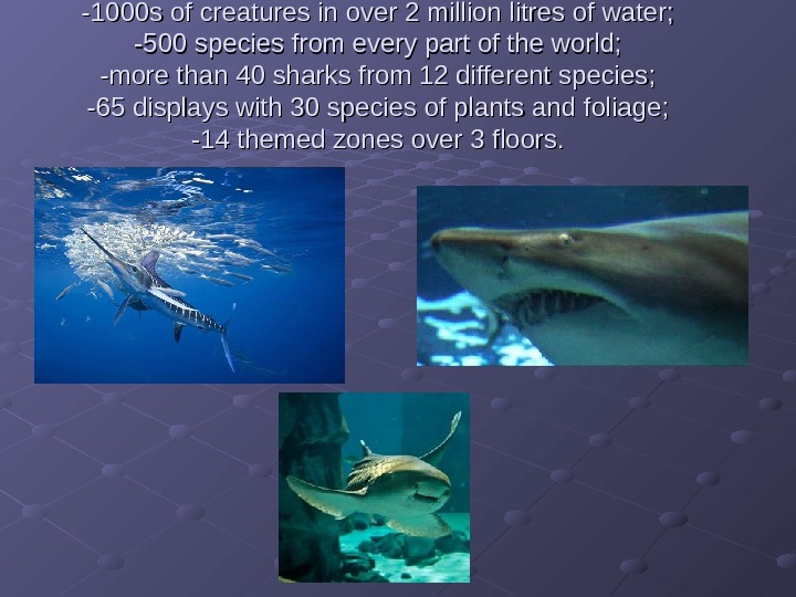 -1000 s of creatures in over 2 million litres of water; -500 species from every