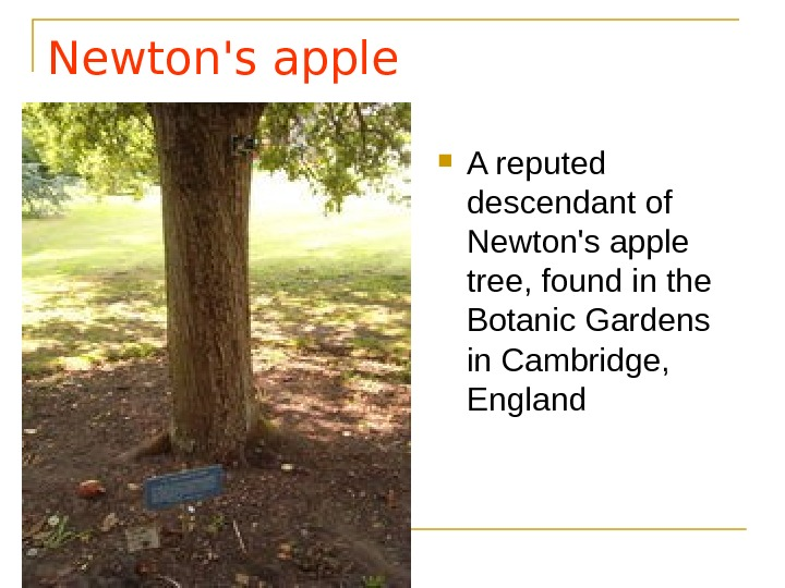 Newton's apple  A reputed descendant of Newton's apple tree, found in the Botanic Gardens in