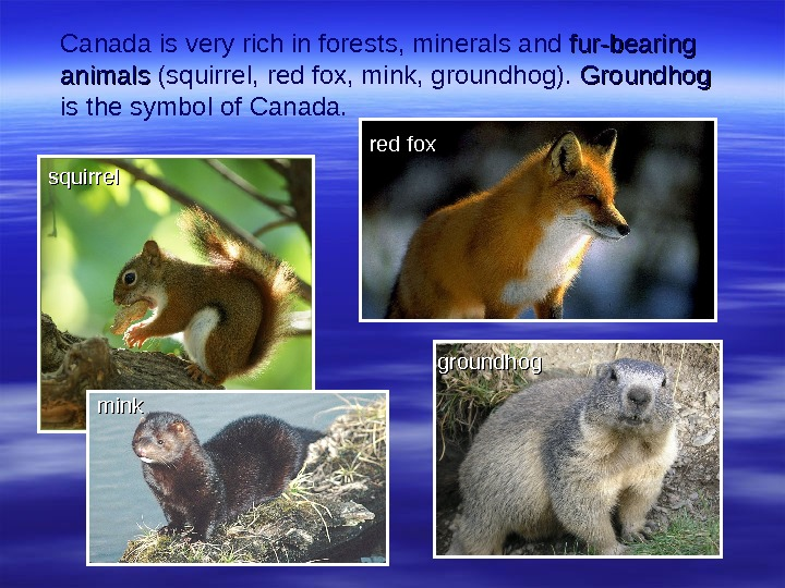 Canada is very rich in forest s , minerals and fur-bearing animals (squirrel,  red fox