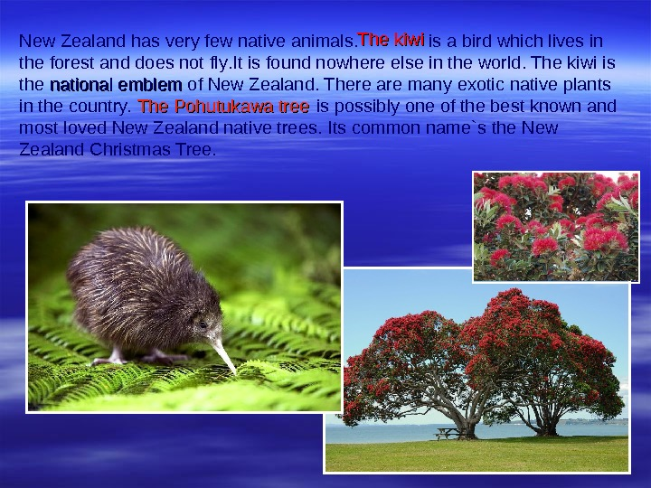 New Zealand has very few native animals.   is a bird which lives in the