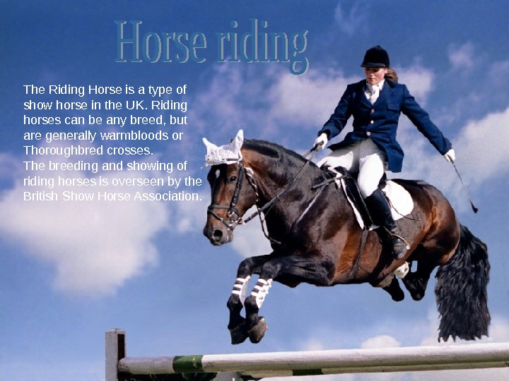 The Riding Horse is a type of show horse in the UK. Riding horses can be