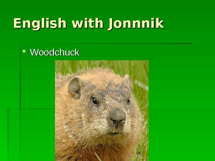 English with Jonnnik Woodchuck