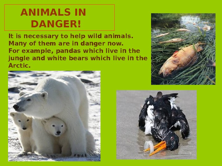 ANIMALS IN  DANGER! It is necessary to help wild animals.  Many of them