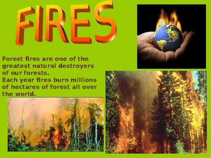 Forest fires are one of the greatest natural destroyers of our forests. Each year fires burn