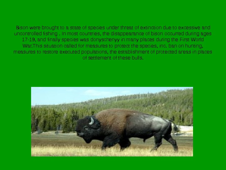 Bison were brought to a state of species under threat of extinction due to excessive and