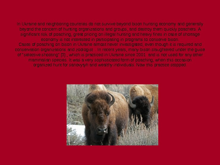 In Ukraine and neighboring countries do not survive beyond bison hunting economy and generally beyond the