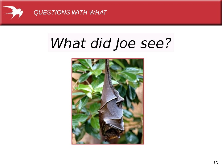 10 What did Joe see? QUESTIONS WITH WHAT
