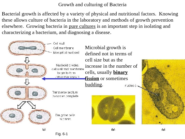 Fig. 6 -1 Growth and culturing of Bacterial growth is affected by a variety of physical