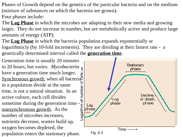 Fig. 6 -3 Phases of Growth depend on the genetics of the particular bacteria and on