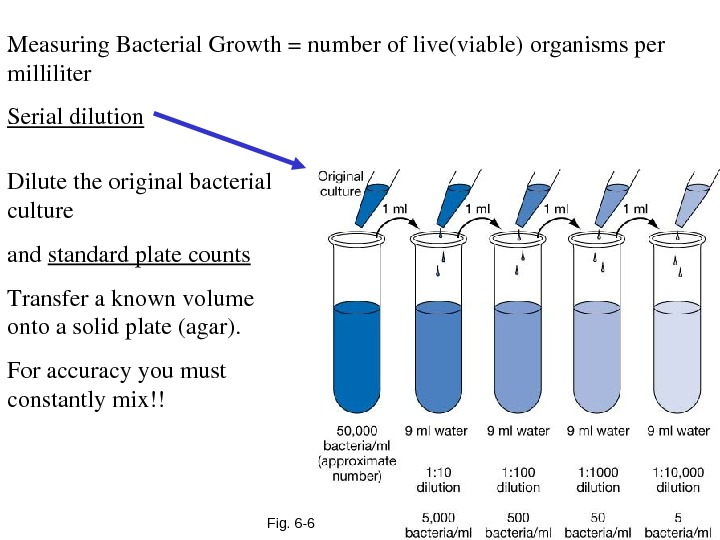 Fig. 6 -6. . Measuring. Bacterial. Growth=numberoflive(viable)organismsper milliliter Serialdilution Dilutetheoriginalbacterial culture and standardplatecounts Transferaknownvolume ontoasolidplate(agar). Foraccuracyyoumust