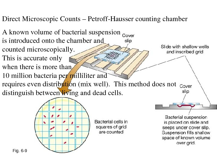 Fig. 6 -9 Direct. Microscopic. Counts–Petroff. Haussercountingchamber Aknownvolumeofbacterialsuspension isintroducedontothechamberand countedmicroscopically.  Thisisaccurateonly whenthereismorethan 10 millionbacteriapermilliliterand requiresevendistribution(mixwell).