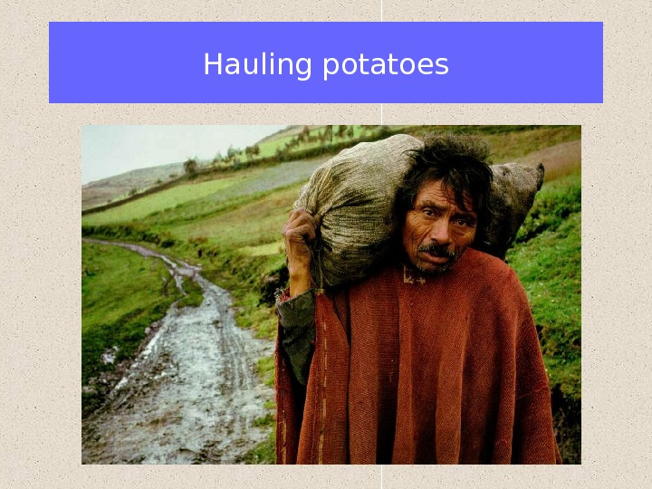Hauling potatoes