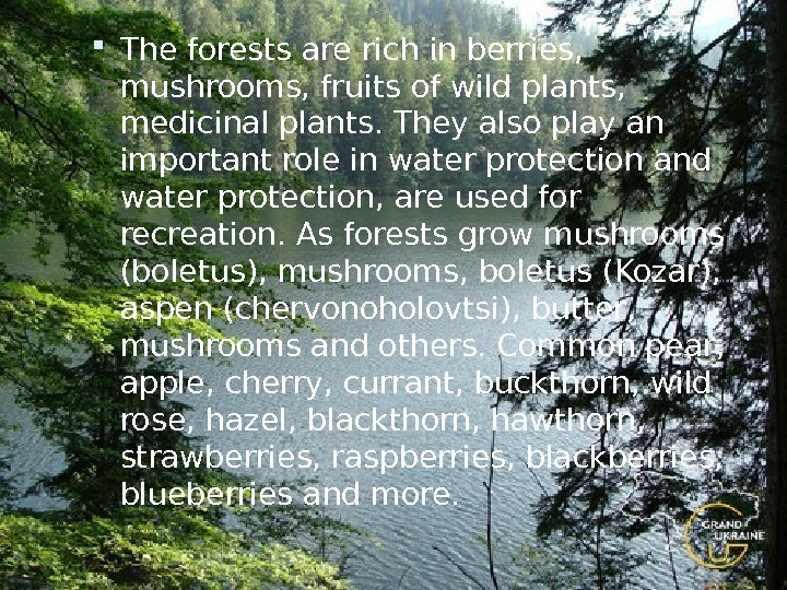The forests are rich in berries,  mushrooms, fruits of wild plants,  medicinal plants.