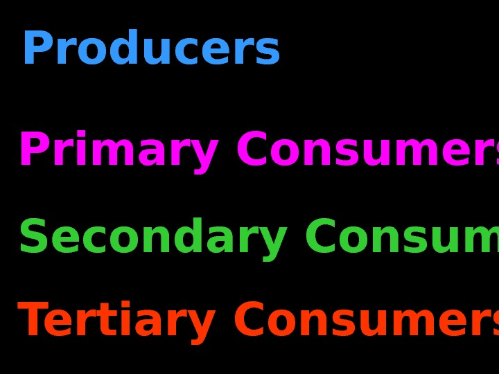 Producers Primary Consumers Secondary Consumers Tertiary Consumers