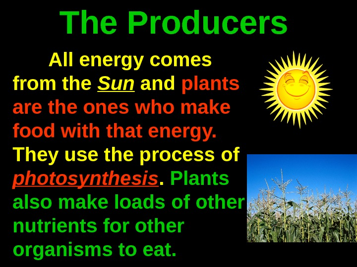 The Producers All energy comes from the Sun and plants are the ones who make food