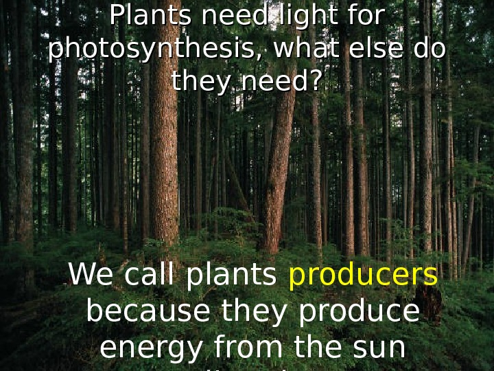 Plants need light for photosynthesis, what else do they need? We call plants  producers
