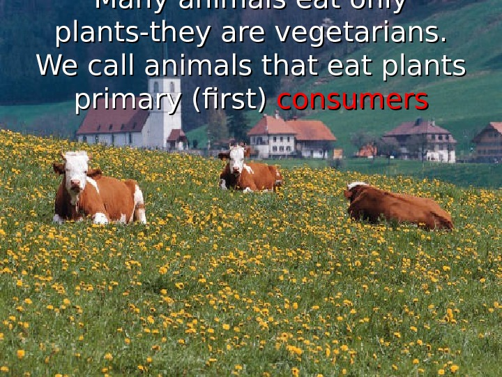 Many animals eat only plants-they are vegetarians.  We call animals that eat plants primary (first)