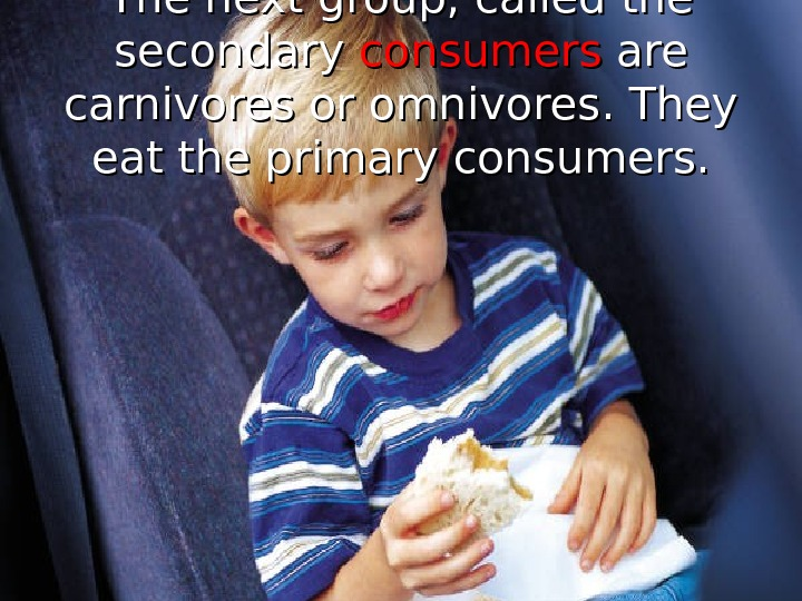 The next group, called the secondary consumers are carnivores or omnivores. They eat the primary consumers.