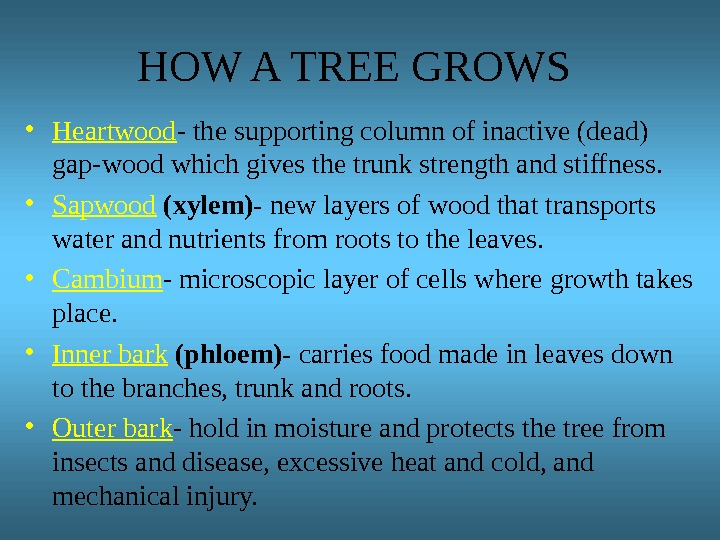 HOW A TREE GROWS • Heartwood - the supporting column of inactive (dead) gap-wood which gives
