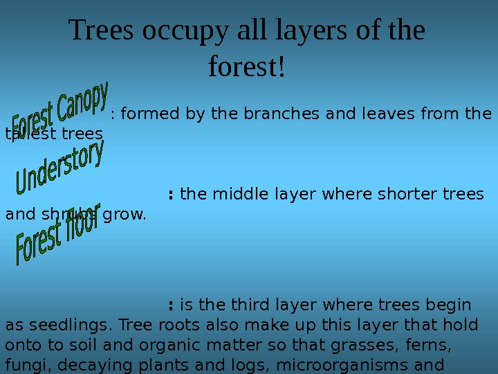 Trees occupy all layers of the forest!  : formed by the branches and leaves from