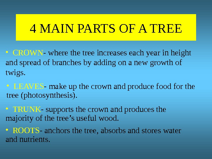 4 MAIN PARTS OF A TREE • CROWN - where the tree increases each year in