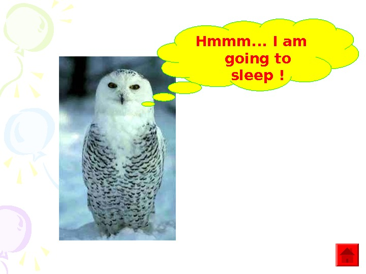 Hmmm. . . I am going to sleep !