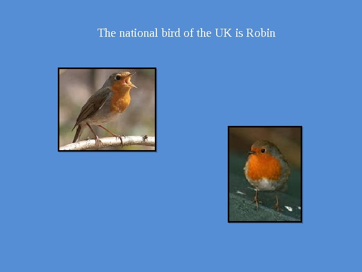 The national bird of the UK is Robin