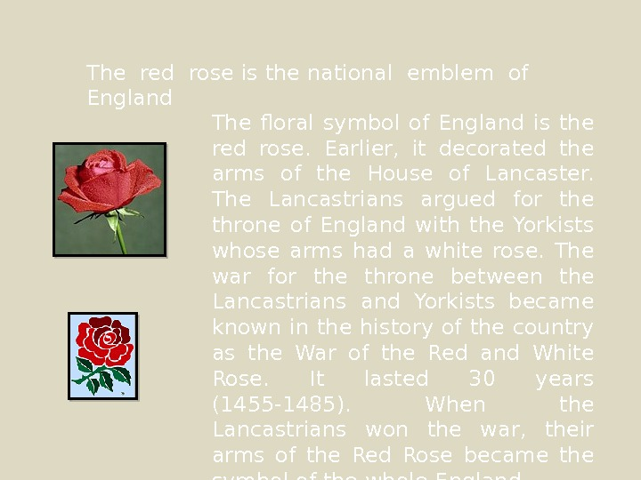 The red rose is the national emblem of  England The floral symbol of England is