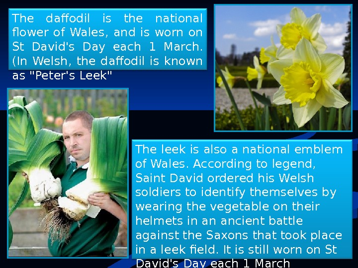 The daffodil is the national flower of Wales,  and is worn on St David's Day